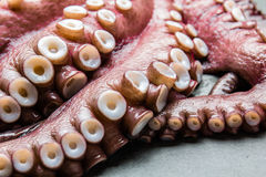 Seafood octopus. Whole fresh raw octopus on gray slate background, top view.  Royalty Free Stock Image