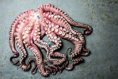 Seafood octopus. Whole fresh raw octopus on gray slate background, top view.  Stock Photo