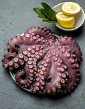 Seafood octopus. Whole fresh raw octopus with lemon and laurel, gray slate background, top view. Seafood octopus. Whole fresh raw octopus on with lemon and Royalty Free Stock Photos