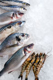 Seafood On Ice Stock Photography