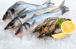 Free Seafood On Ice Royalty Free Stock Images - 24357259