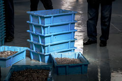 Fish auction ready. Seafood organized and boxed for the fish auction Royalty Free Stock Photo