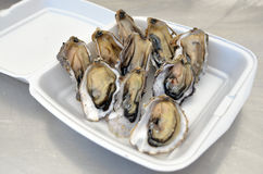 Seafood - Oysters Royalty Free Stock Image