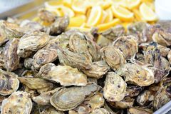 Seafood oysters with sliced lemon. Fresh oysters on a fish market. Healthy luxury and expensive food concept. Royalty Free Stock Photos