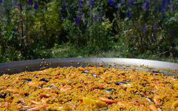 Seafood Paella outdoors Stock Images