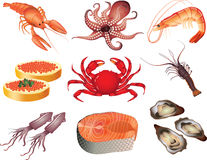 Seafood photo-realistic set Stock Photo
