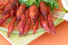 Seafood on a plate. Fresh seafood with salad on a nice plate Stock Images