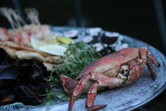 Seafood on a plate. Crab and other sea food an a plate Stock Photos