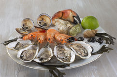 Seafood platter with  oyste and shrimp Stock Photos