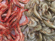 Seafood - Prawns - Shrimps Stock Image