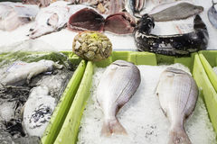 Seafood prepared Stock Photography