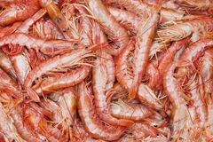 Seafood. Raw seafood in fish market Stock Photography