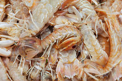 Seafood. Raw seafood in fish market Royalty Free Stock Photography