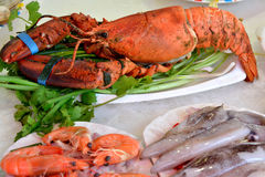 Seafood raw materials. Various seafood as lobster and shrimp, and other raw material in dishes, shown as featured local aroma and different cooking or food Stock Photos