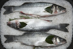 Seafood ready to cook. Italian Branzino cooked with salt stock image