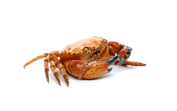Seafood red crab. Stock Photography