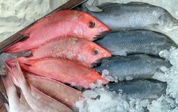 Seafood Stock Image