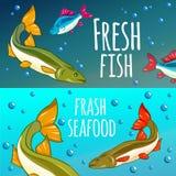 Seafood Restaurant. Seafood Background. Fresh fish, salmon. Vector illustration Stock Photos