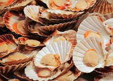 Seafood. At  Rialto  fish market in Venice Italy Stock Image