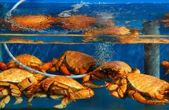 Seafood for sale Royalty Free Stock Image