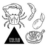 Seafood sea crab appetizer of crab with beer. Vector Stock Photo