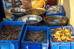 Seafood for sell stored in the box from Chapora fish market in I Stock Image