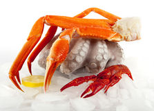 Seafood served on ice. Marine food for gourmets Royalty Free Stock Image