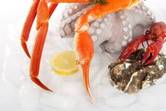 Seafood served on ice Stock Photos