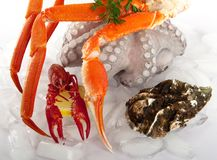 Seafood served on ice Stock Images