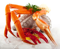 Seafood Served On Ice Royalty Free Stock Photo