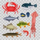 Seafood set with crab, fish, mussel and shrimp isolated on transparent background. Design for restaurant menu, market. Marine creatures in flat style - vector Stock Images