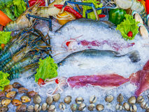 Seafood set Royalty Free Stock Image