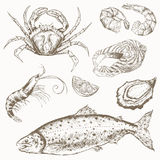 Seafood set. Hand drawn vintage illustration with fish, crab, shrimp and oyster royalty free illustration