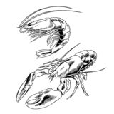 Seafood set with lobster and shrimp vector illustration stock illustration