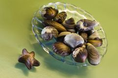Seafood shaped chocolates. Delicious sheafood shaped chocolates on green background Stock Image