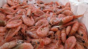 Seafood. Shrimp in a box. stock video