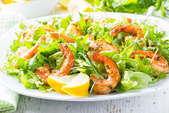 Seafood shrimp lettuce salad on white plate Royalty Free Stock Photos