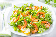 Seafood shrimp lettuce salad on white plate Stock Image