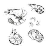 Seafood. Shrimps. Stock Photo