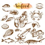 Seafood sketch set. Fish, shrimp, crab, lobster, octopus, mollusks isolated graphic on a white background a set. Vector. Illustration art. Food and restaurant Royalty Free Stock Images