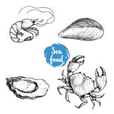 Seafood sketches set. Fresh shrimp, mussel, oyster and crab. Sea market products collection. Vector illustration. Isolated on white background vector illustration