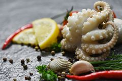 Seafood squid plate ocean gourmet dinner fresh tentacles of octopus with herbs and spices. On dark background stock photography