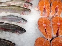 Seafood in the store. View at the fresh rainbow trout whole on the ice in the store display case Royalty Free Stock Photo
