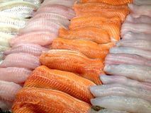 Seafood in the store. View at the tilapia, salmon and pickerel fish fillets in the store display case Stock Photography