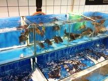 Seafood supermarket Stock Image