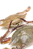 Seafood-Swimming crab royalty free stock photos