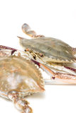 Seafood-Swimming crab. On white stock photos