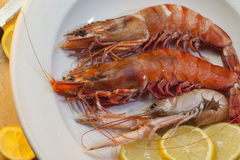 Seafood - Tiger Prawns and Langoustine Royalty Free Stock Image