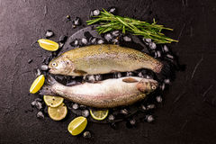 Seafood. Two raw rainbow trouts marinated with lime, rosemary. Seafood. Two raw rainbow trouts marinated with lime, peper, spices and rosemary on black stone royalty free stock photography