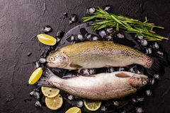 Seafood. Two raw rainbow trouts marinated with lime, rosemary. Seafood. Two raw rainbow trouts marinated with lime, peper, spices and rosemary on black stone royalty free stock photo